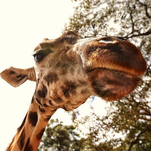 Африка - поездка в парки