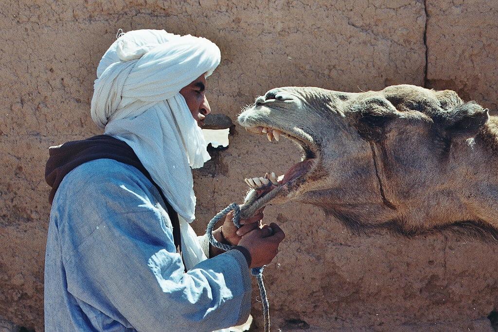 Бербер - необычные факты о Марокко