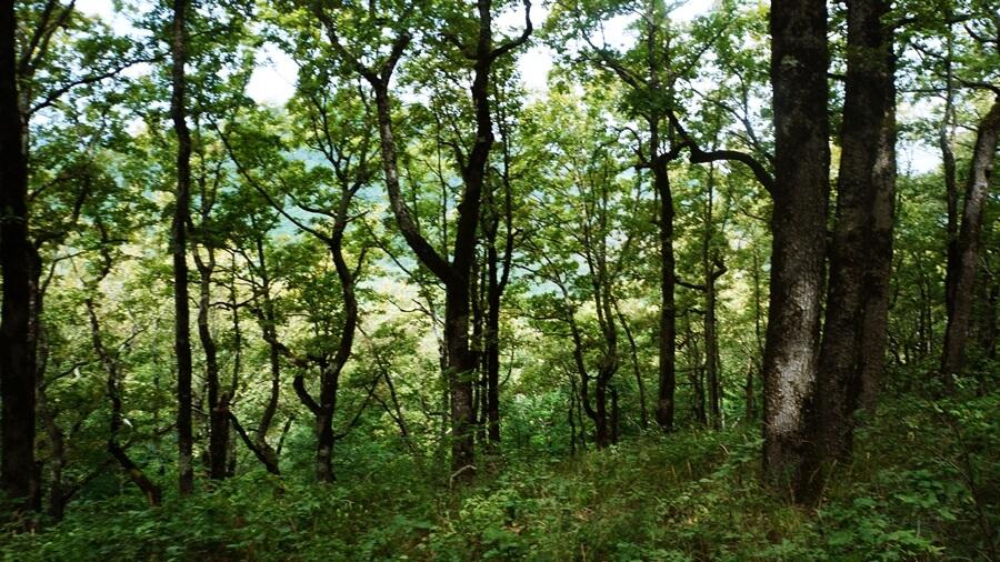Деревья вдоль склона - Горячий ключ