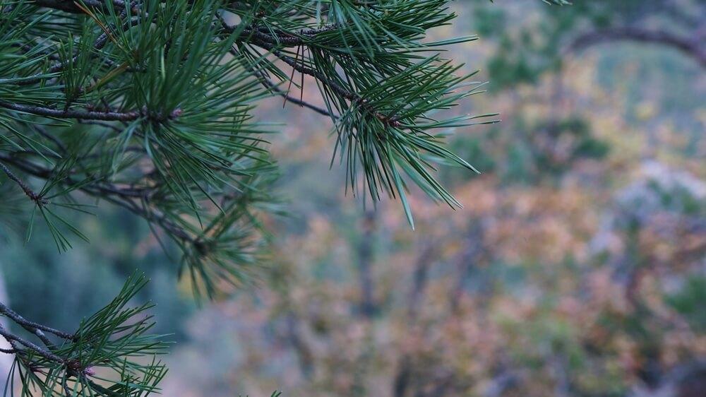 Виды с Планческих скал